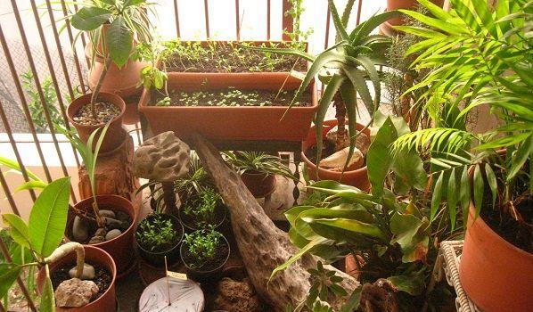 Arriva l'App per coltivare l'orto sul balcone