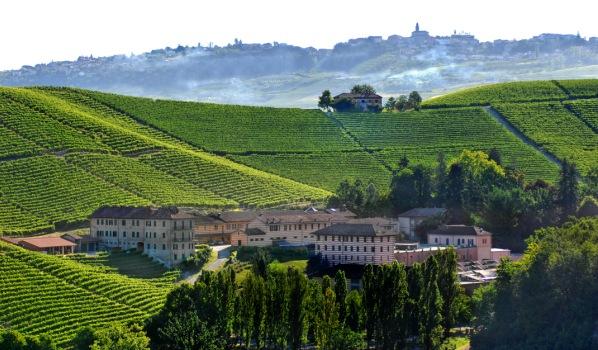 I vini del Piemonte