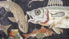 A lezione dallo chef: conosciamo il pesce 1