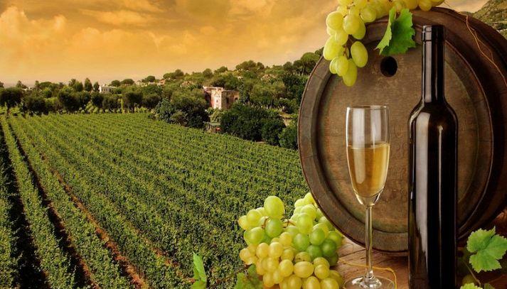 Viaggio nei vigneti della Toscana con 5 vini ed i suoi abbinamenti