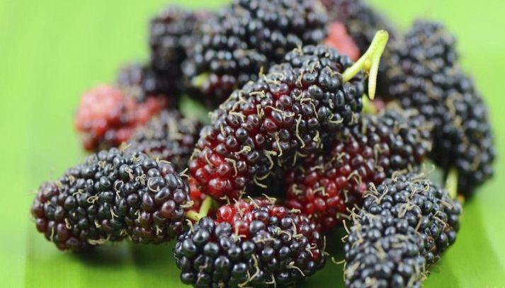 More di gelso, il frutto dimenticato