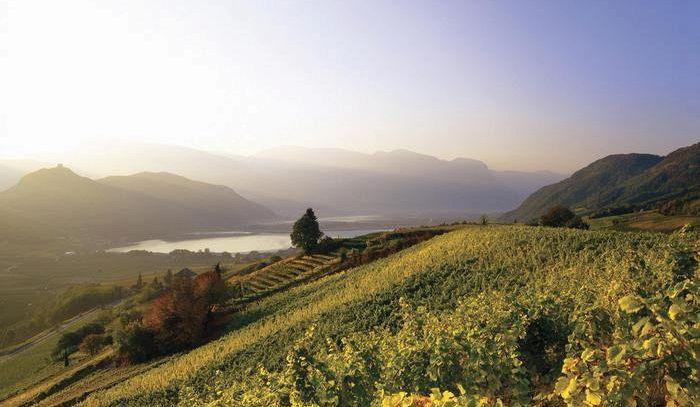 Kaltern è la prima cantina italiana certificata Fair'n green