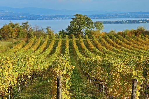 *Vino, Coldiretti: record storico di export a 6 miliardi, +7%