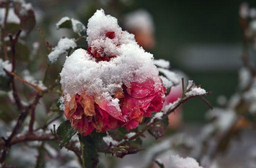 Freddo dal Nord Europa, da lunedì inizia l'inverno