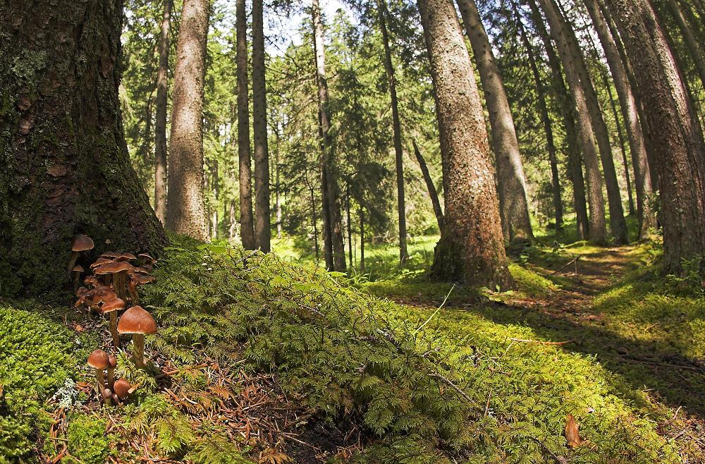 Taglia alberi bosco, 50 mila euro multa