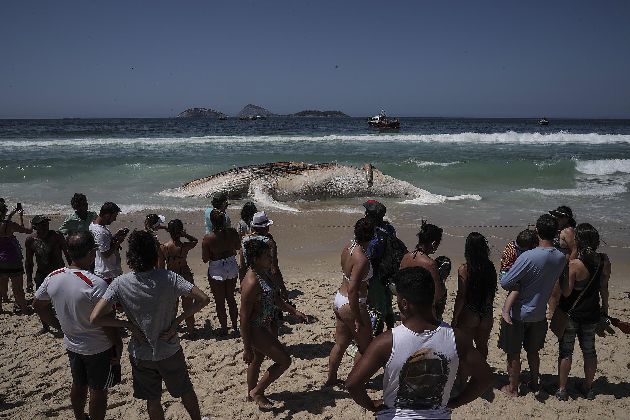 Balena arenata sulla spiaggia di Ipanema