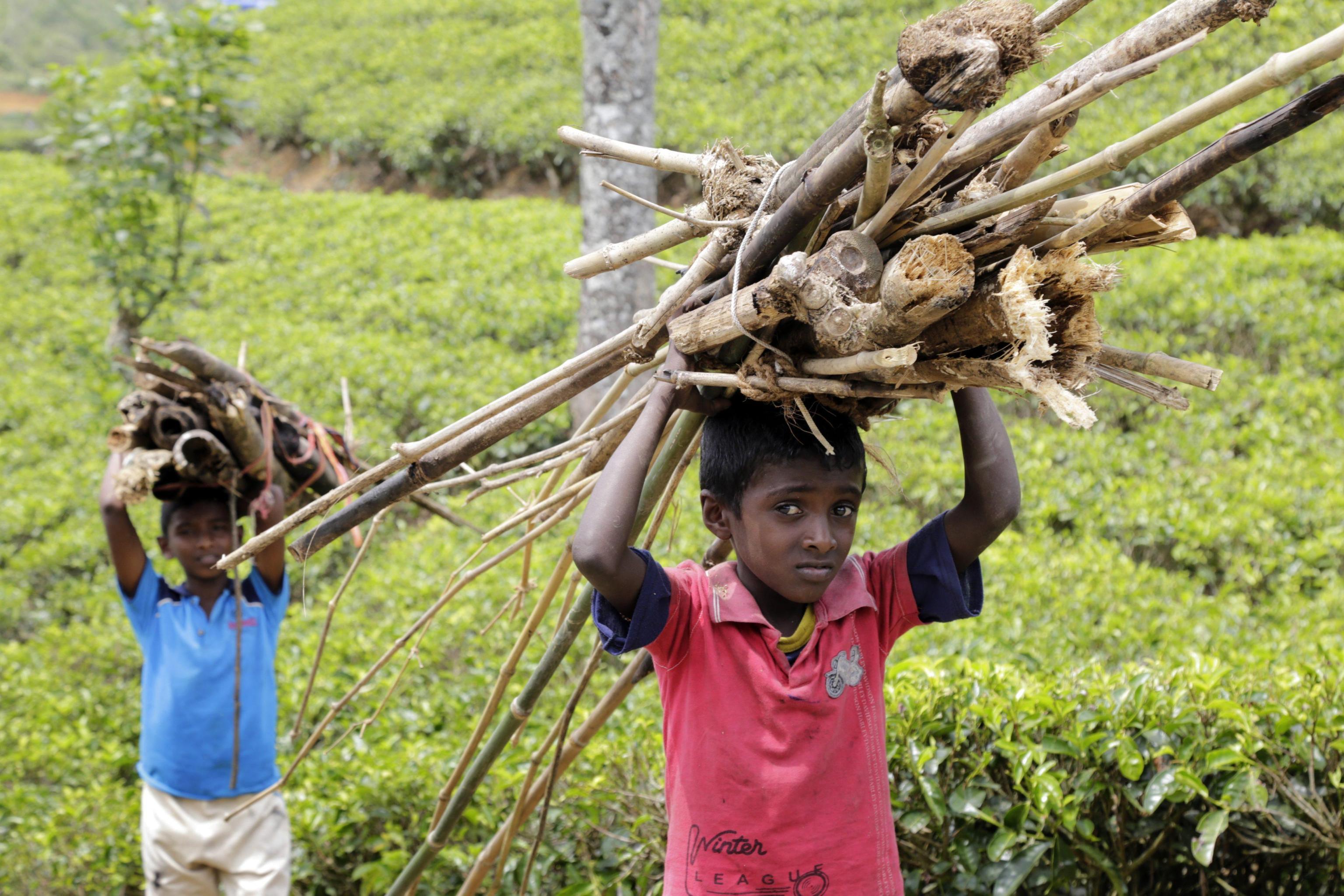 Tamil contro Sri Lanka, torture e stupri