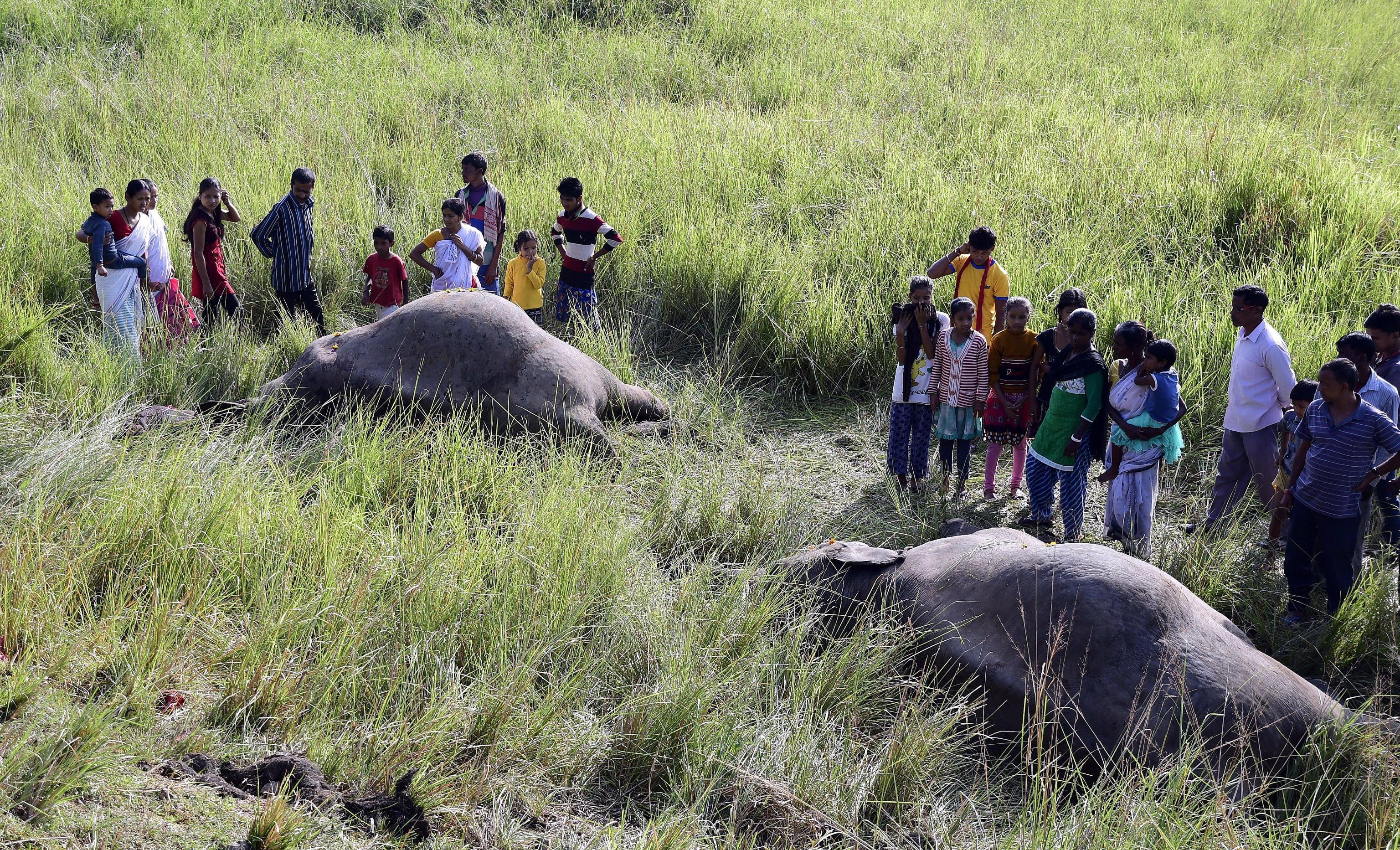 India: treno travolge elefanti in Assam