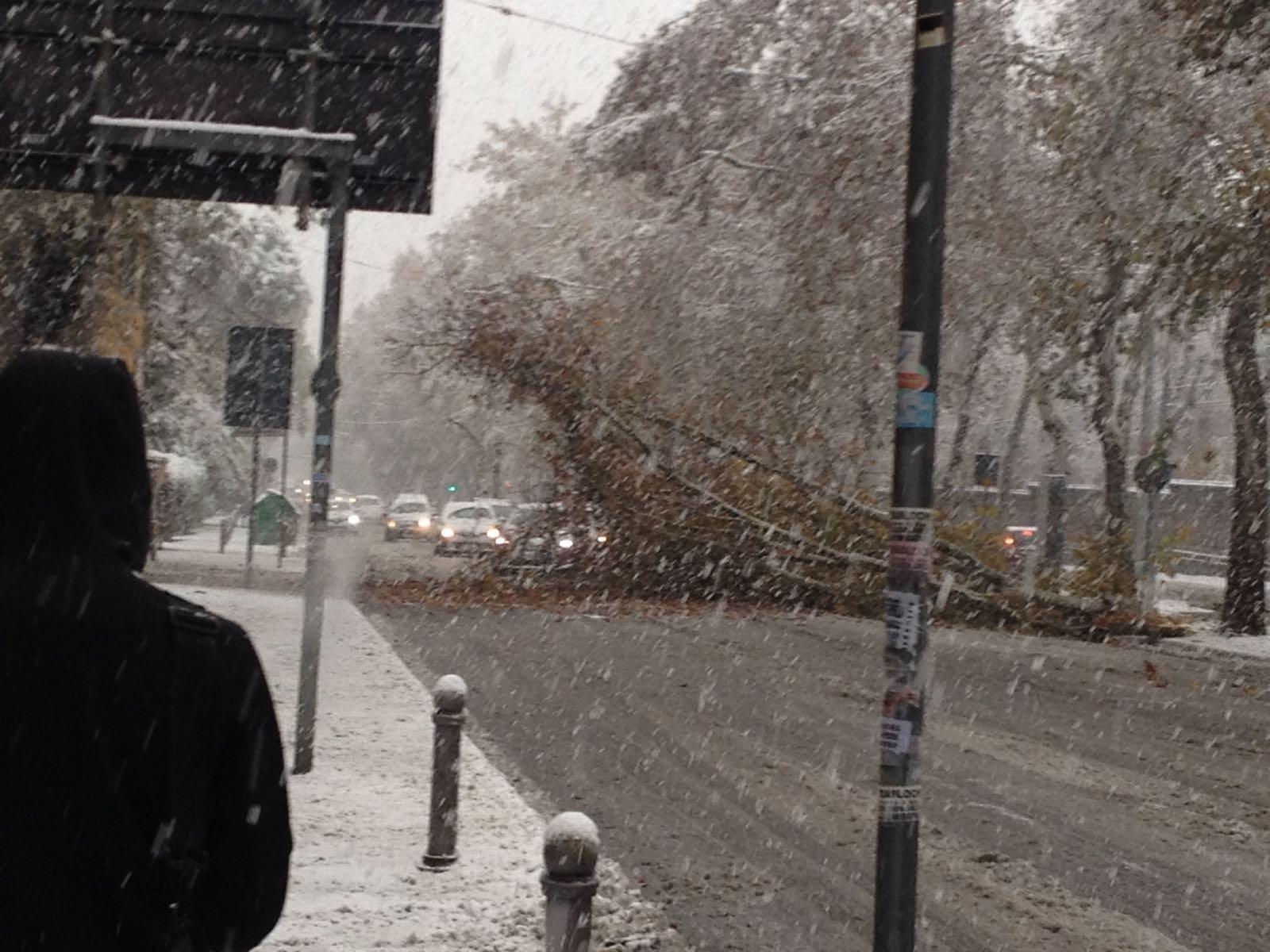 Neve a Bologna, albero cade sui viali