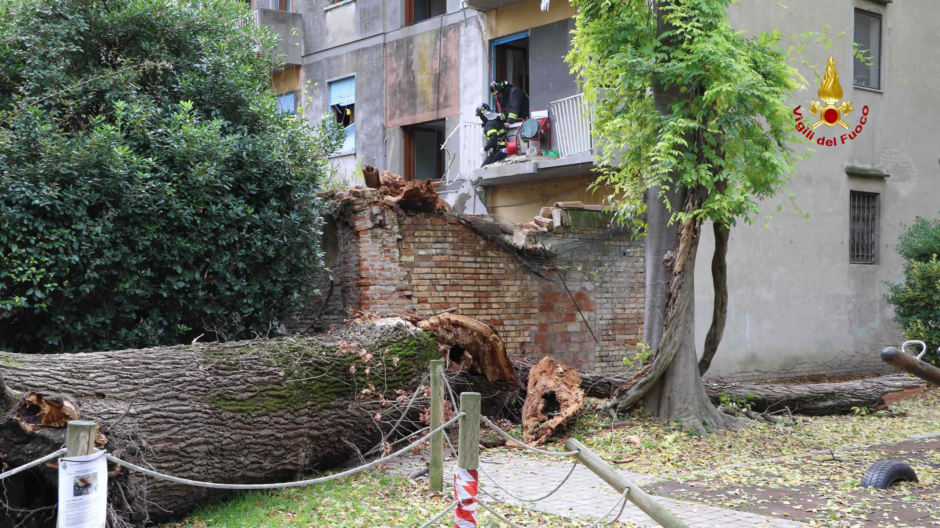 Cade albero su casa a Venezia,7 sfollati