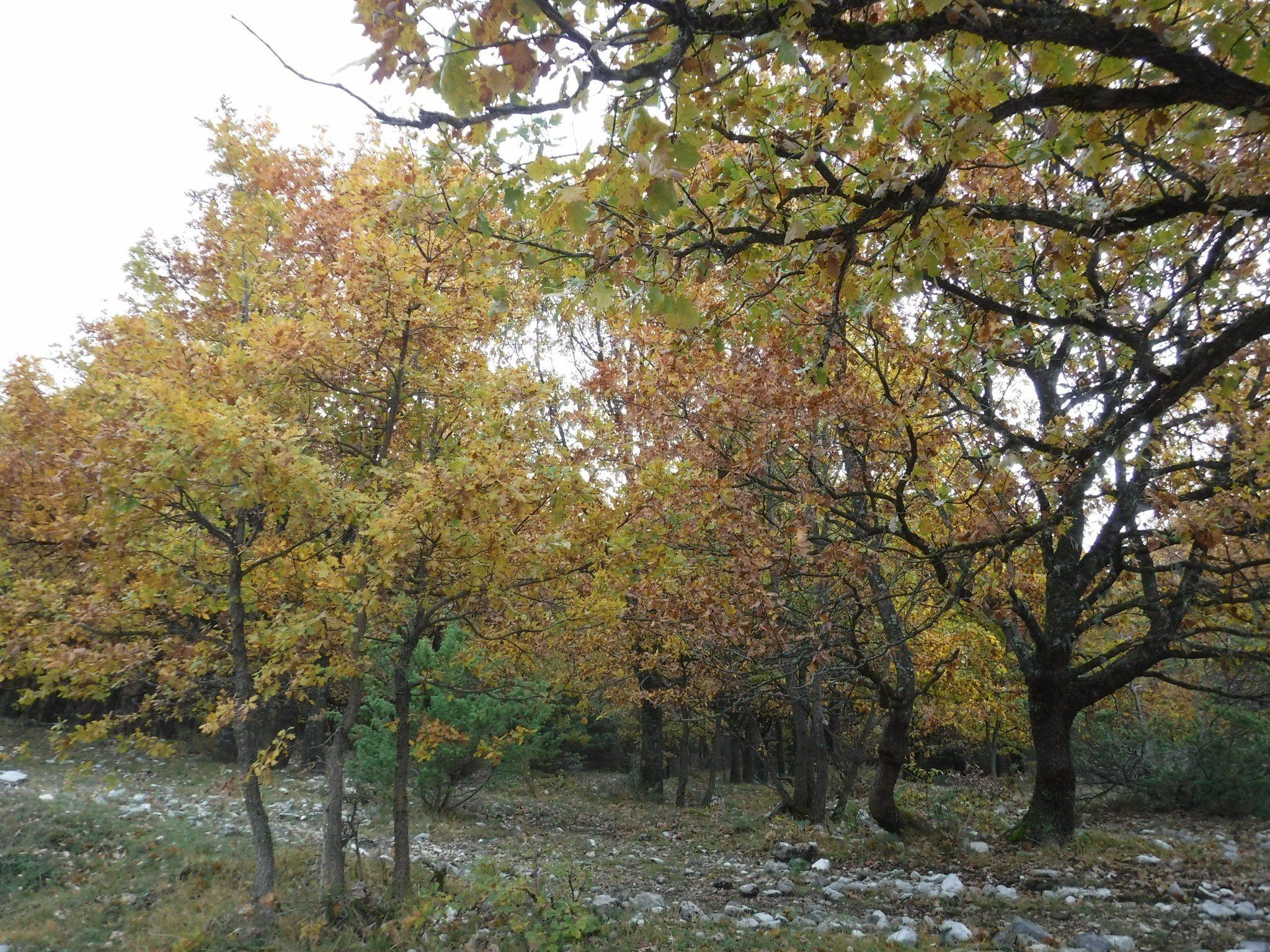 Cadavere incappucciato legato ad albero
