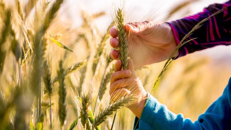vantaggi dell'agricoltura sostenibile