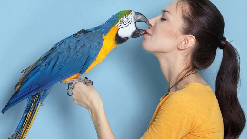 addomesticare i pappagalli domestici