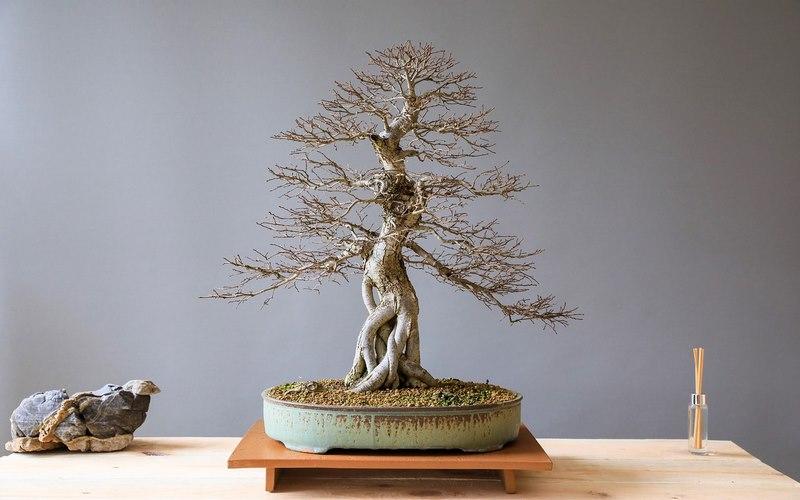 il giusto vaso da bonsai
