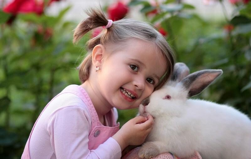 Come riconoscere malattie dei conigli
