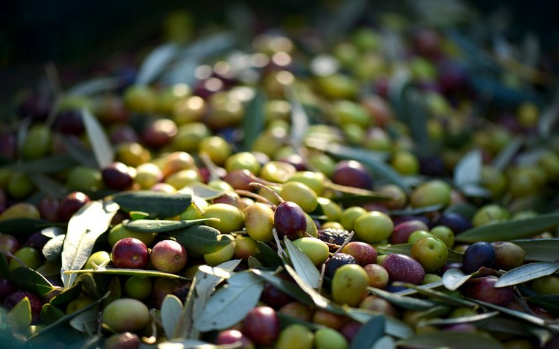tipi di olive italiane