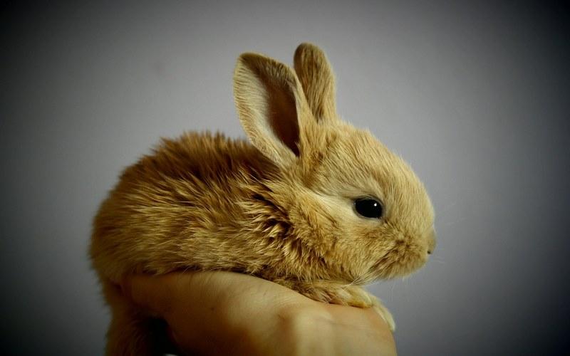 la corretta alimentazione del coniglio