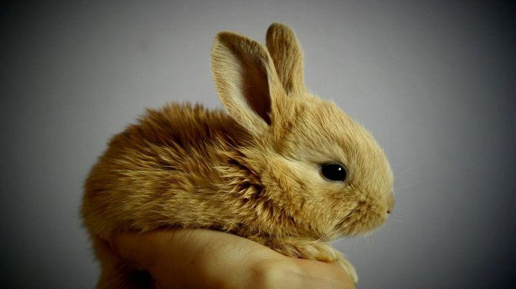 come nutrire il tuo coniglio con una corretta alimentazione