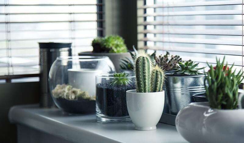 Idee per utilizzo vasi da interno