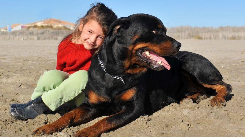 quali sono i migliori cani da guardia