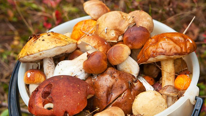 quali sono i principali tipi di funghi
