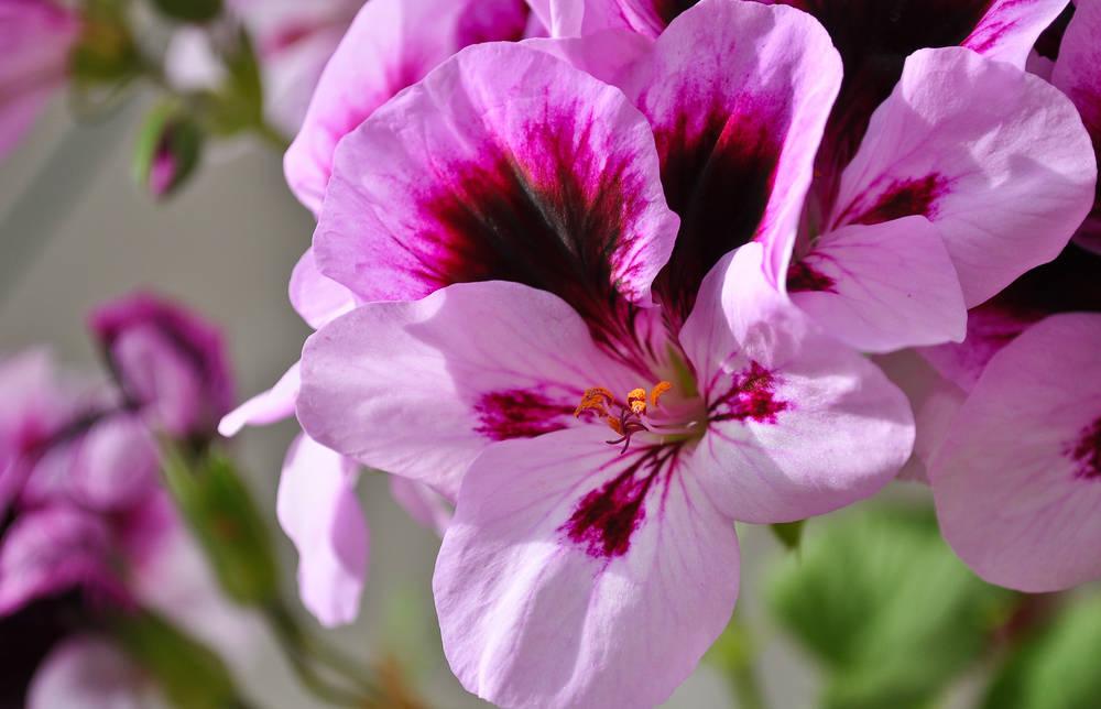 Balconi fioriti piante e fiori da scegliere per arredare gli esterni