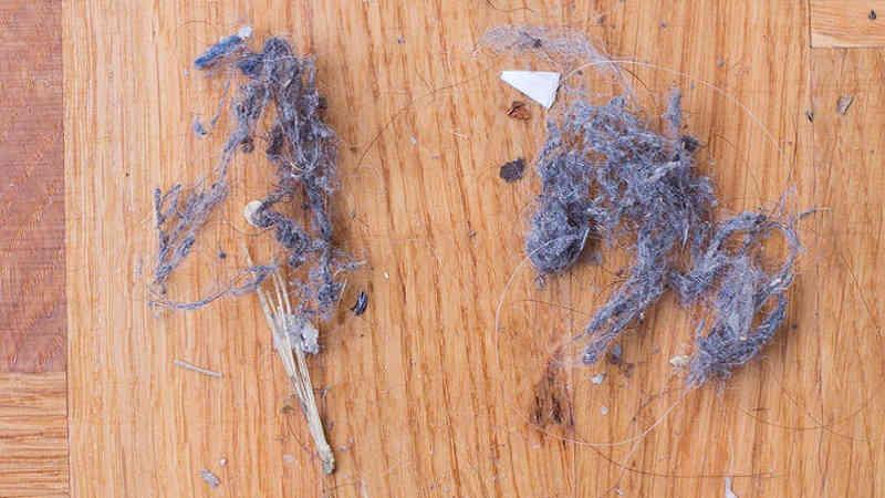 Come eliminare gli acari della polvere consigli efficaci
