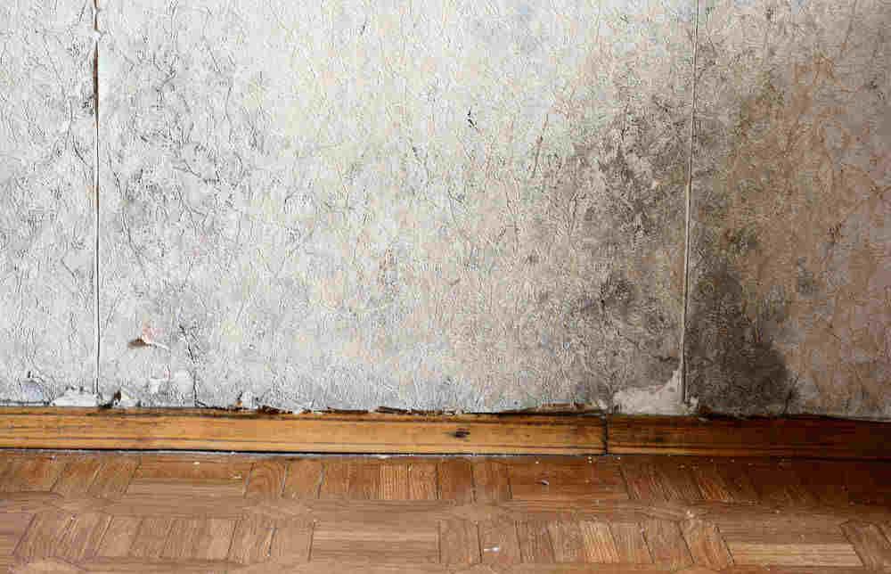 Pareti D Acqua Per Interni Prezzi : Muffa sui muri per perdite d acqua cosa fare per rimediare