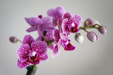 Come curare le orchidee? varietà terreno temperatura e luce
