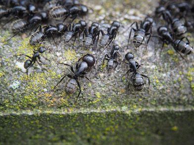 Formiche In Casa Rimedi Naturali E Non Per Eliminarle