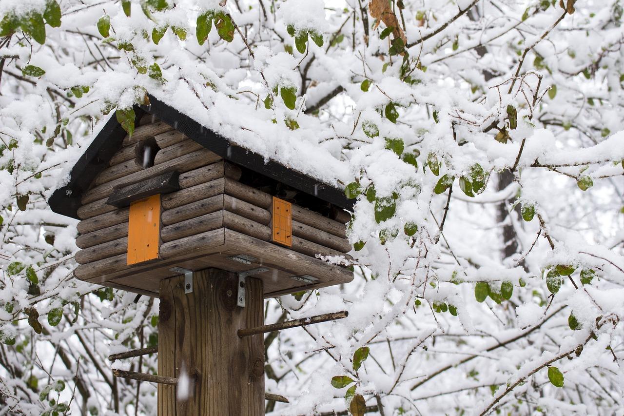 Come progettare e costruire una casa sull 39 albero - Costruire casa albero ...