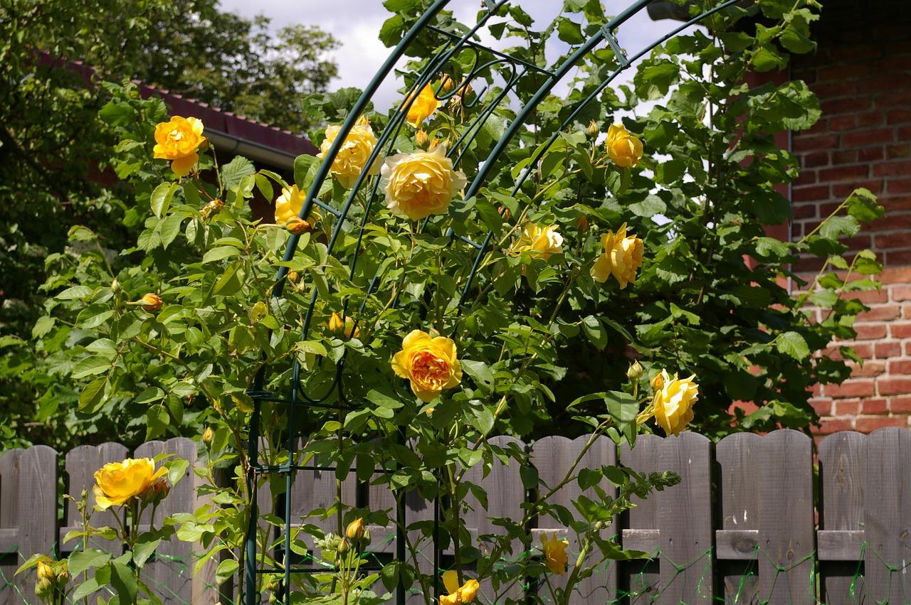 Come progettare un giardino all inglese