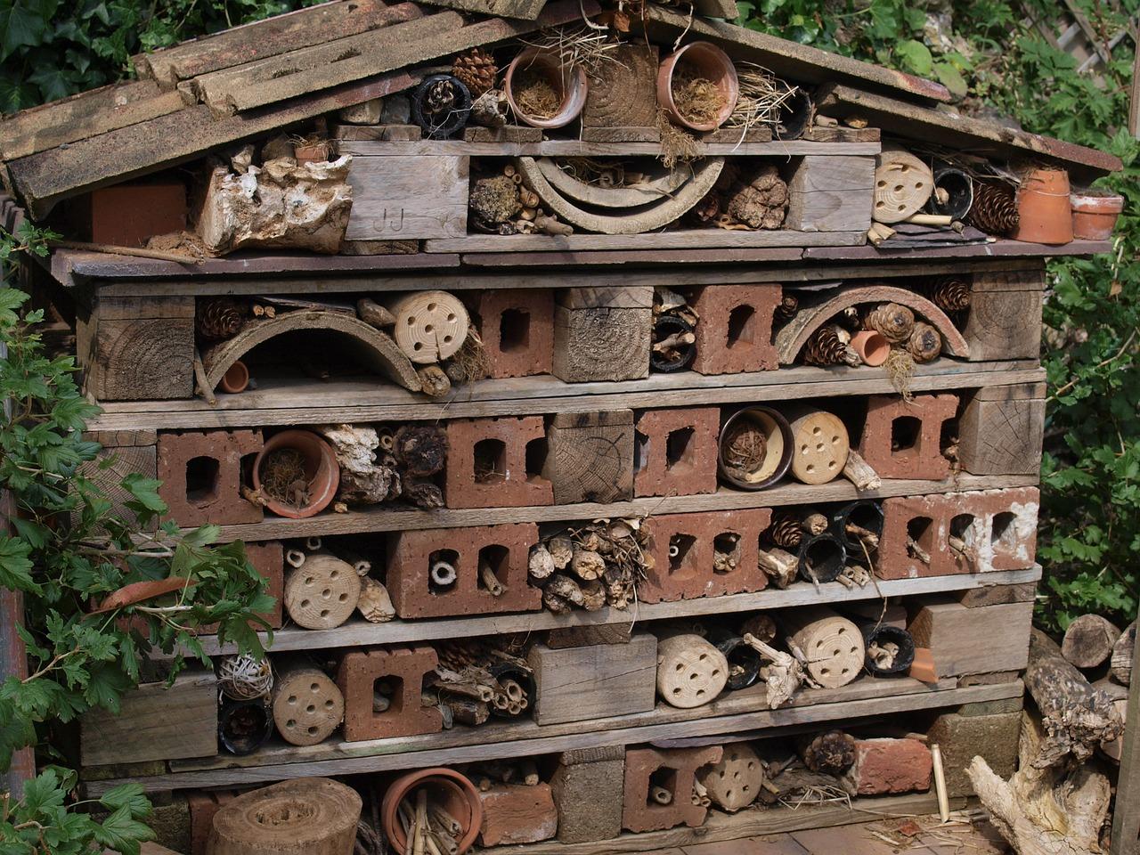 Casetta per insetti in giardino: ecco a cosa serve