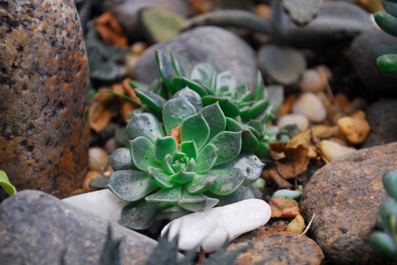 Come scegliere le piante per un giardino roccioso