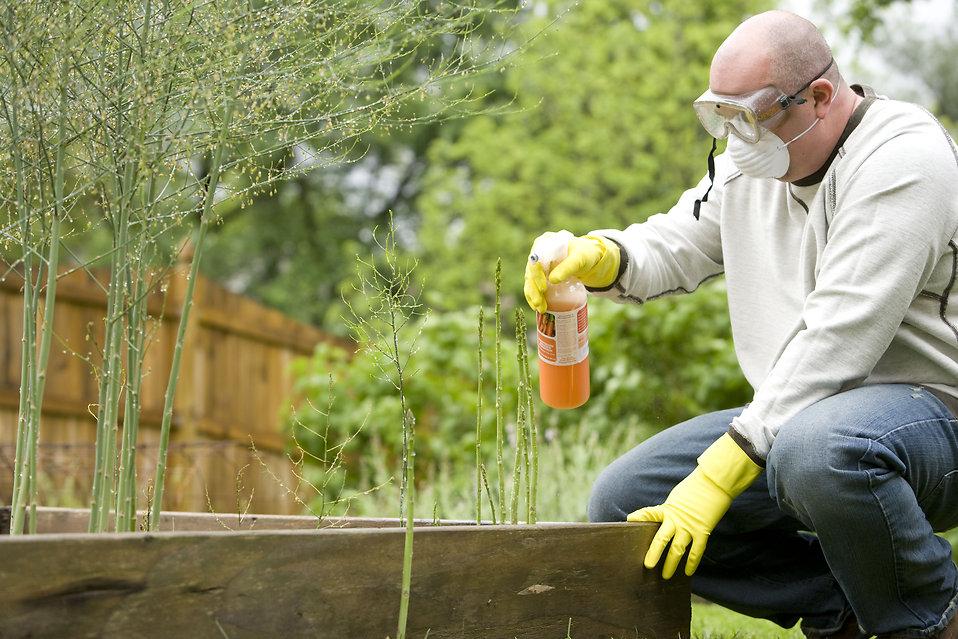 L'irrorazione delle piante con anticrittogamici