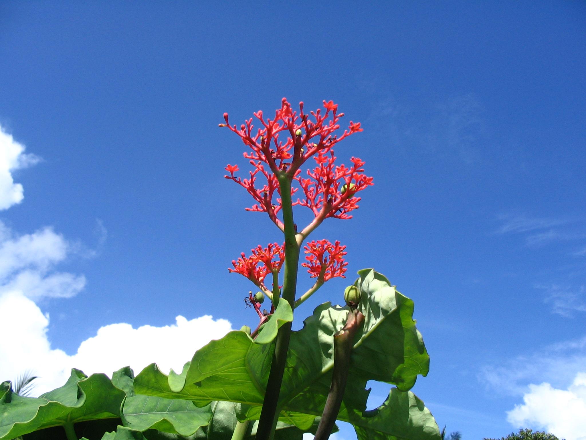 5 piante tropicali da giardino