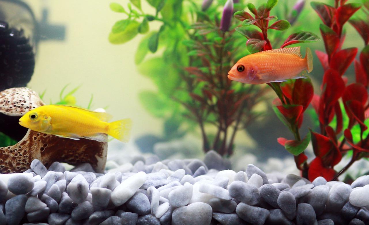 Come traslocare un acquario? I consigli dei professionisti