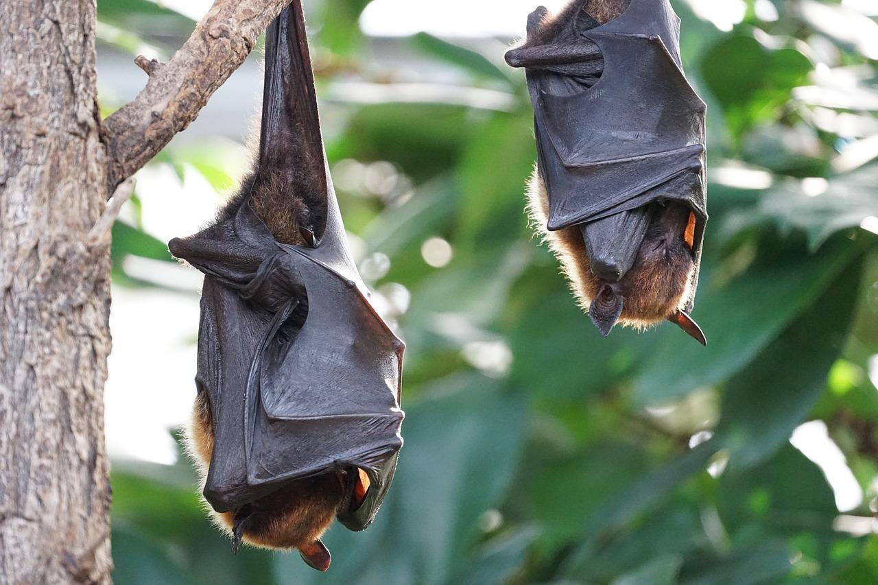 Disinfestazione pipistrelli: come allontanarli dalla propria abitazione?
