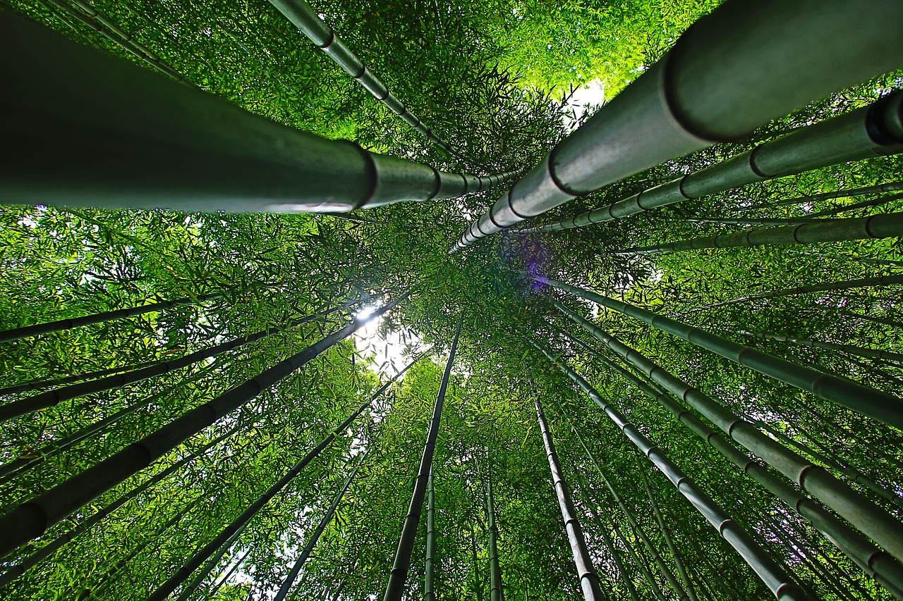 Legno di bambù: caratteristiche tecniche di questa essenza esotica