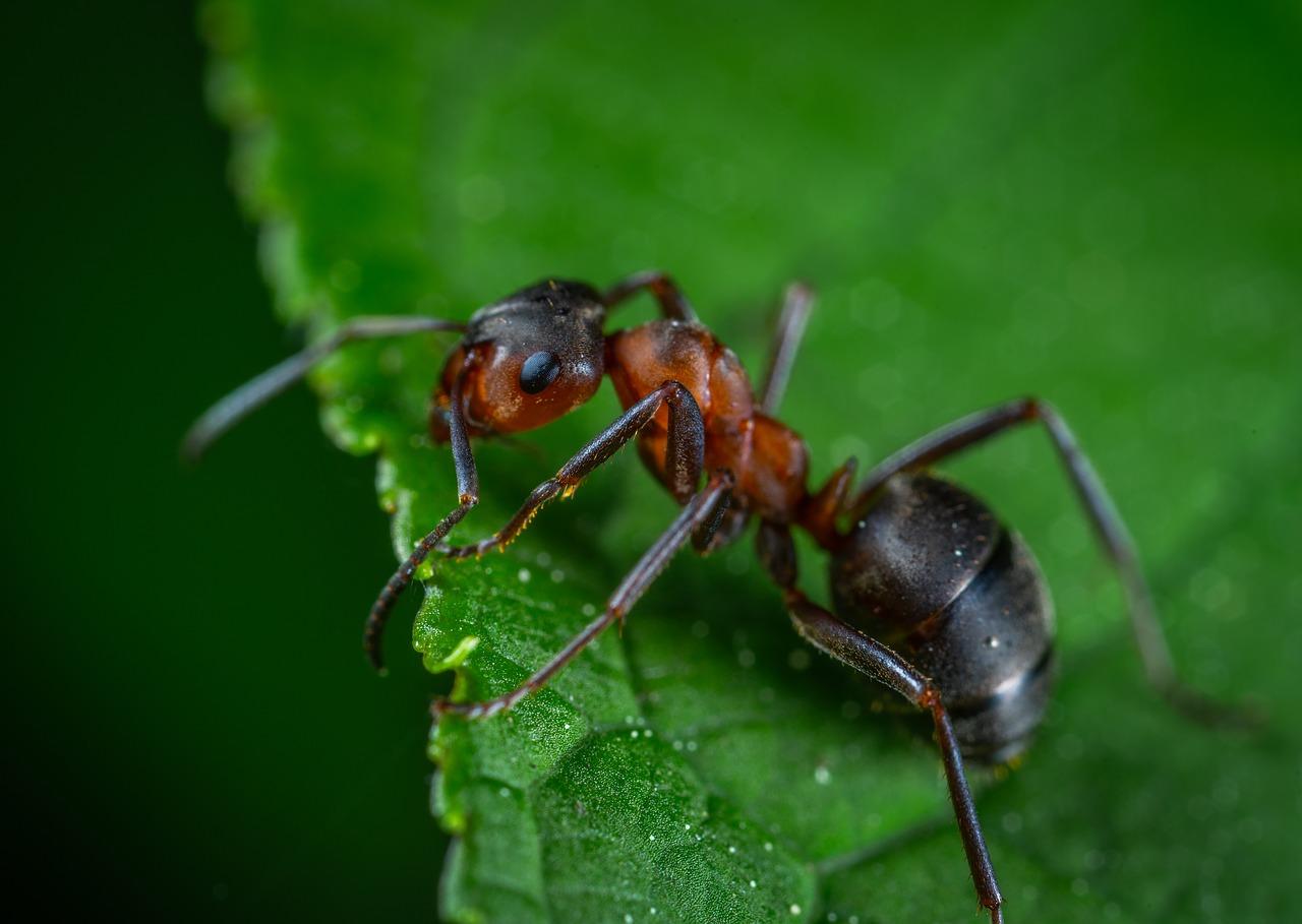 Come eliminare le formiche dal giardino?
