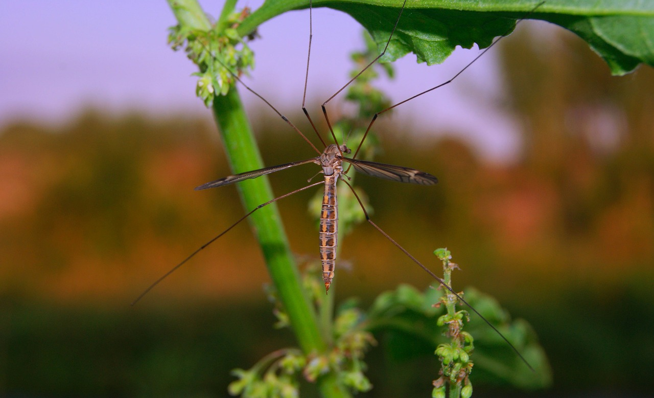 Piretro: come funziona questo insetticida naturale?