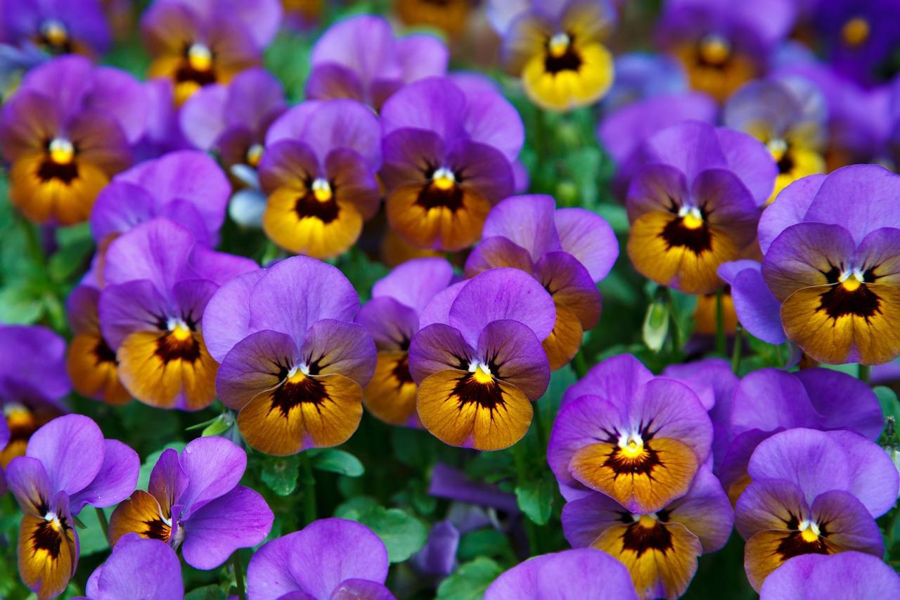 Fiori rossi da giardino lista dei più belli greenstyle