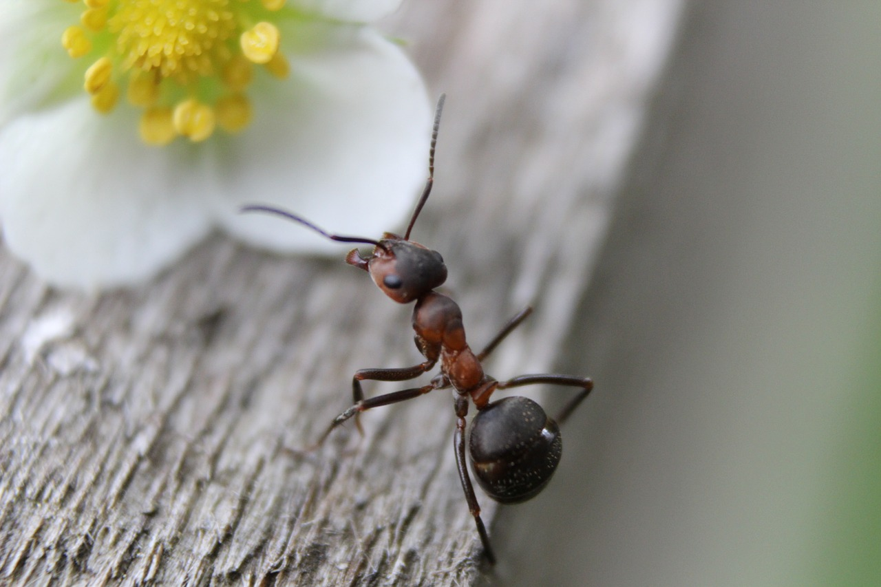 Esche e trappole per formiche: come funzionano?