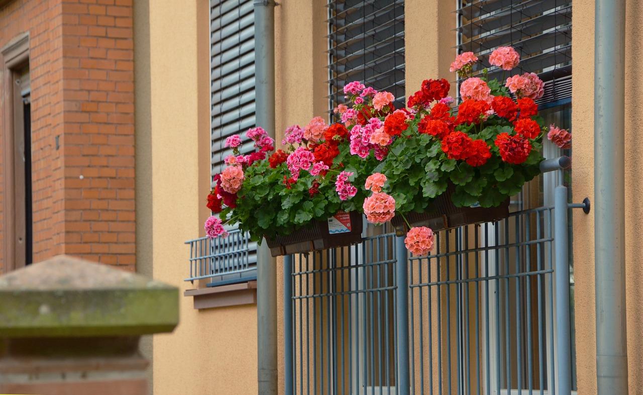 5 fiori da balcone perfetti per stare in pieno sole