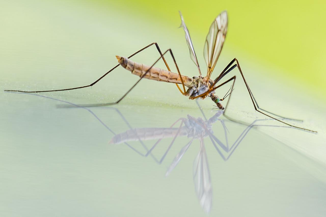 Come eliminare definitivamente le larve di zanzare?