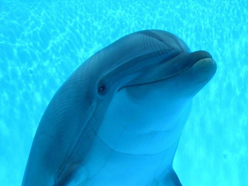 Visita all 39 acquario di genova prezzi dei biglietti e for Acquario casa prezzi