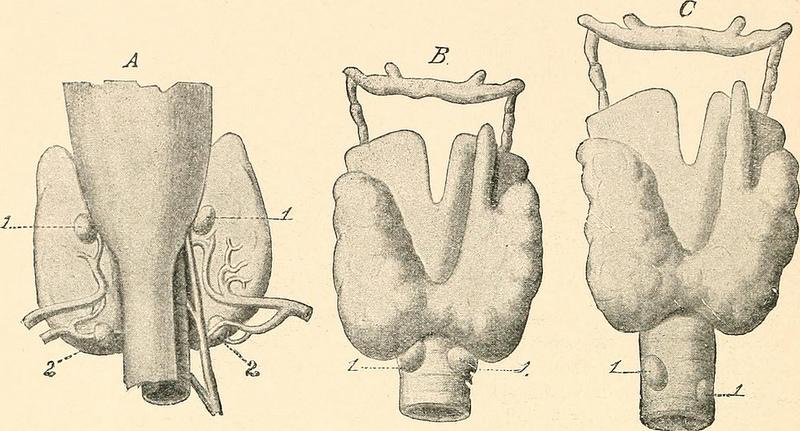 Patologie tiroidee: tutti i sintomi da non trascurare
