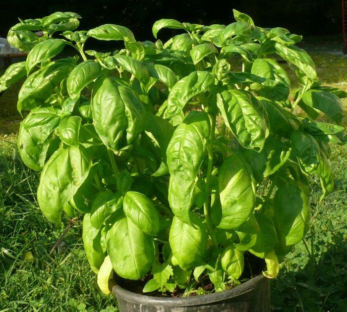 Le verdure che potete comprare una volta e poi coltivare for Comprare terreni e costruire una casa