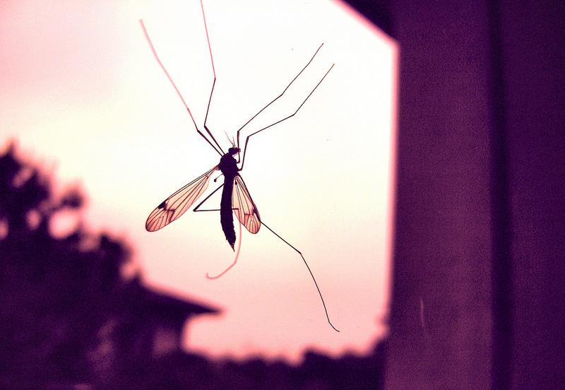 Come funziona ZanzaMapp, l'app per combattere le zanzare