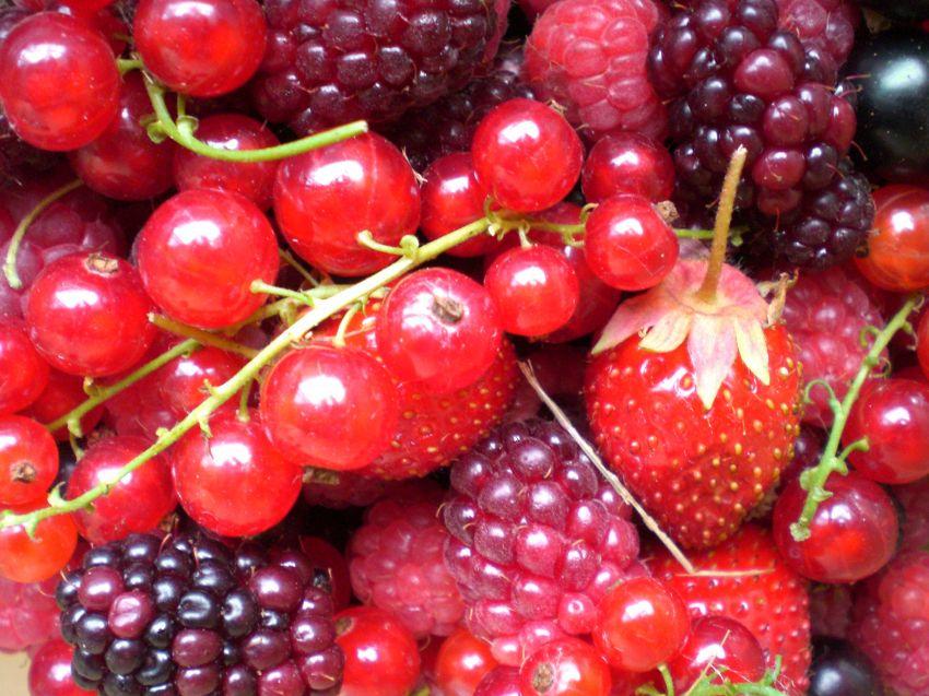 I frutti rossi, il nuovo elisir per l'eterna giovinezza